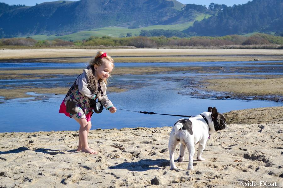 Sécurisant pour les enfants, accueillant pour les chiens