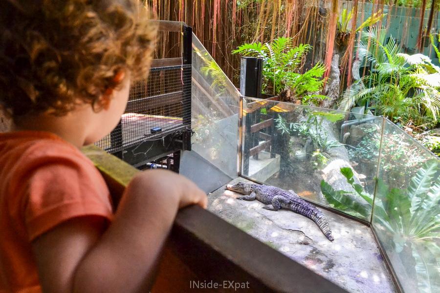 L'espace réduit du crocodile