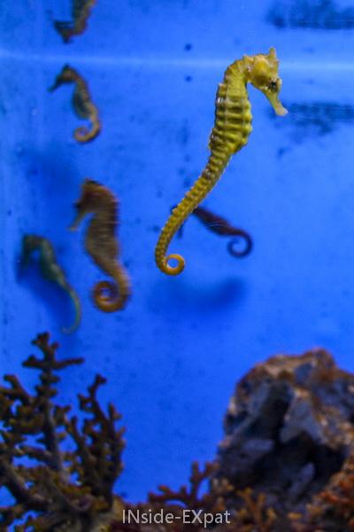 Seahorse at Ocean Park, Manila, Philippines