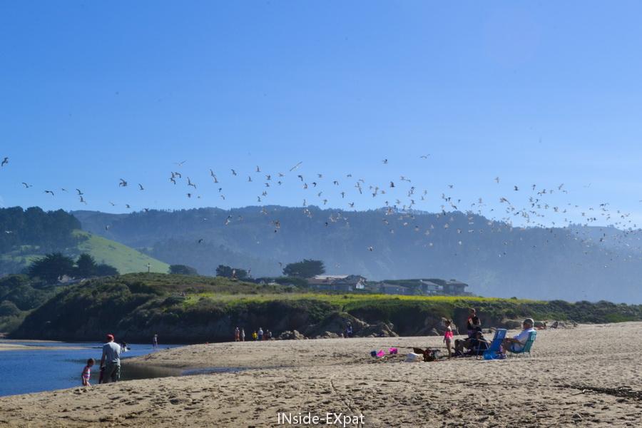 Zone ornithologique pour observer les oiseaux migrateurs