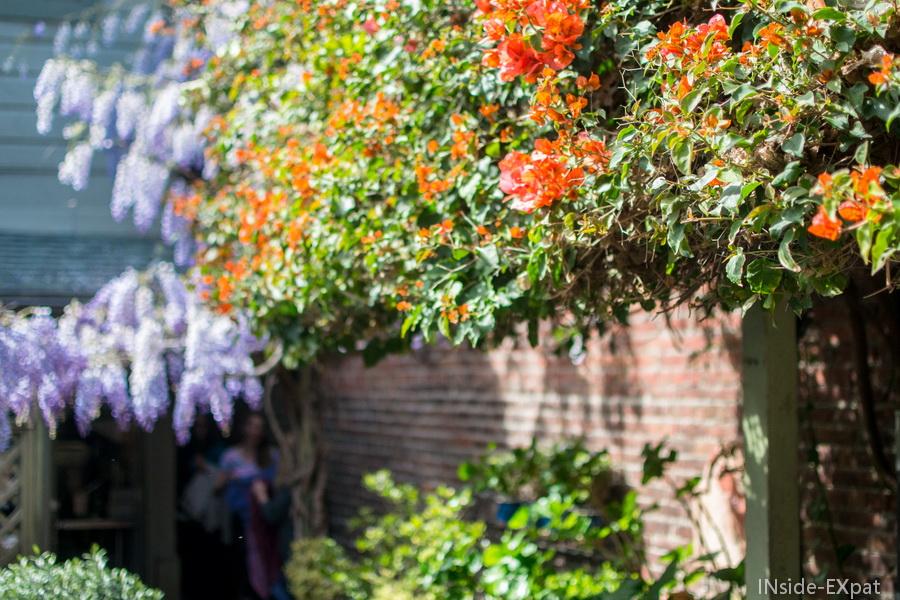 Beaucoup de fleurs sur le patio