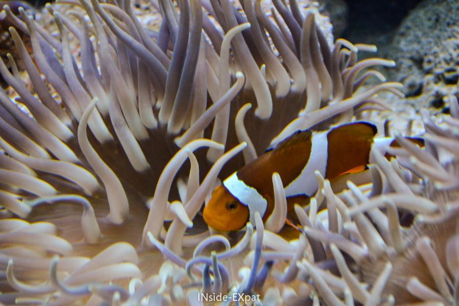 Autre espèce présentée à l'Oceanarium