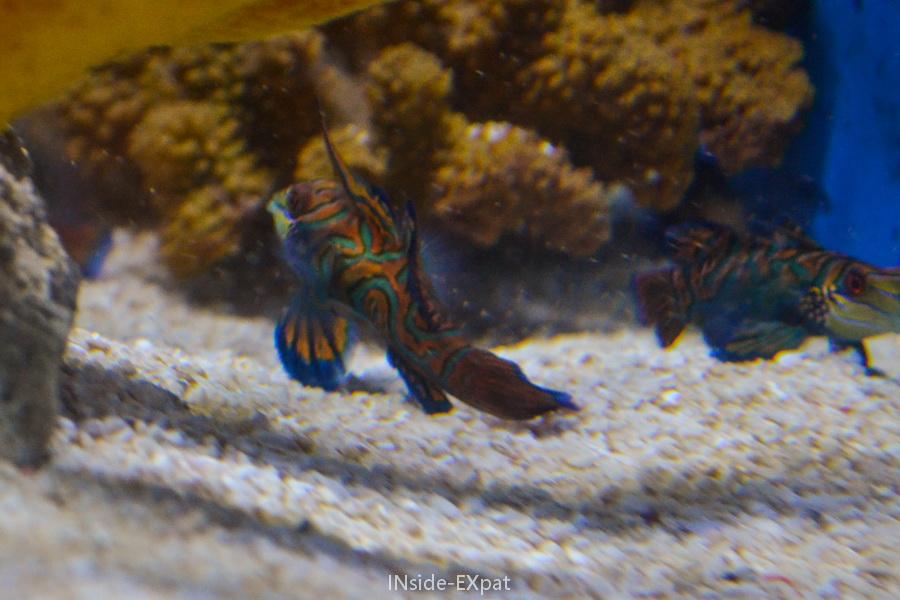 Espèce présentée à l'Oceanarium