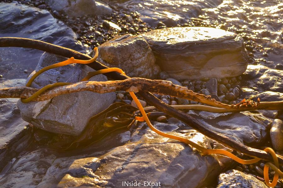 Sur la plage de Point Lobos