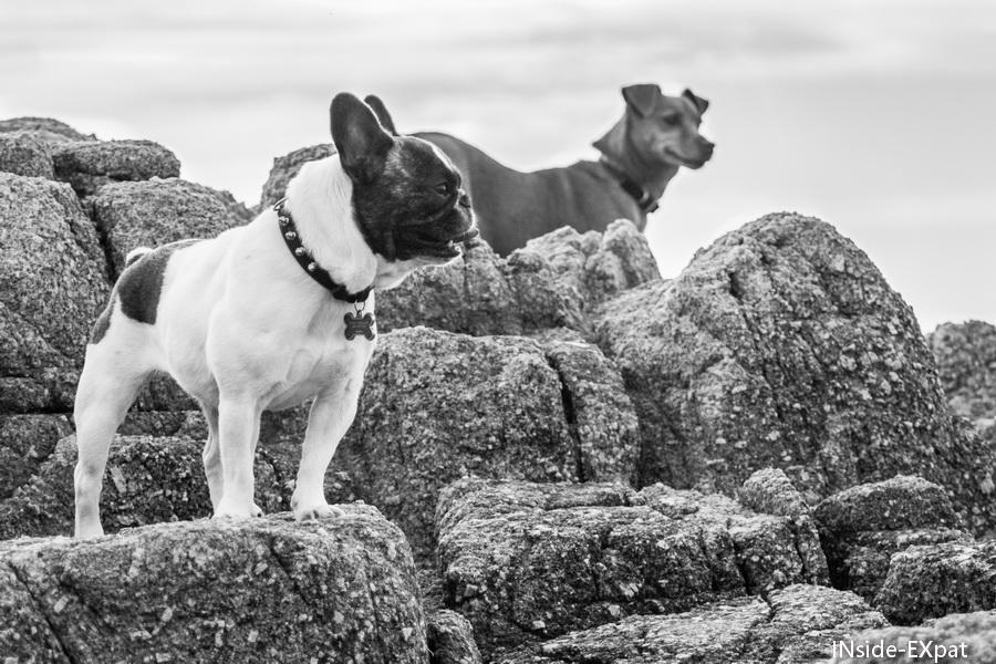 Buddy et Doggy B. sur les rochers