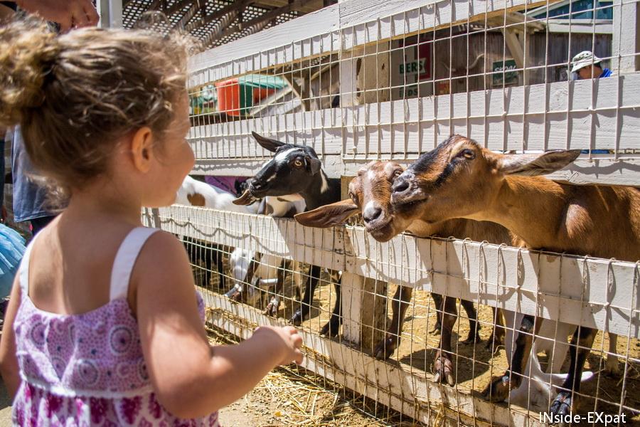 Mimi et les chèvres