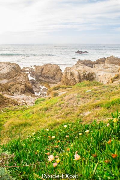 Fleurs sur le chemin bordant les plages