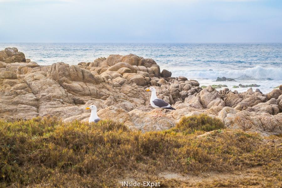 Couple de mouettes sur la plage