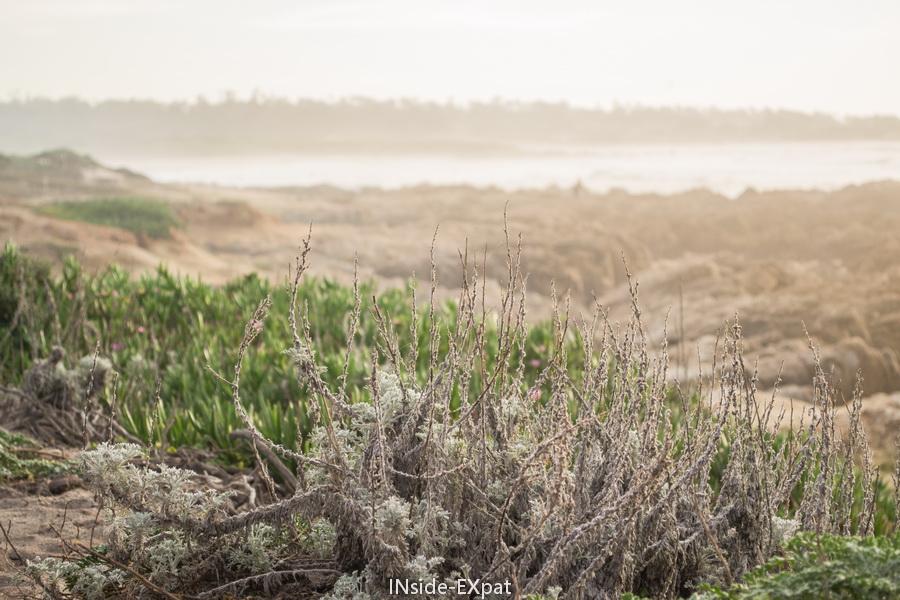Végétation de la côte sauvage