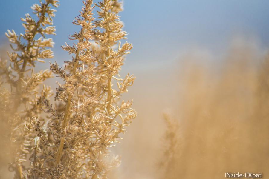 Plantes dans le désert en Nevada Central