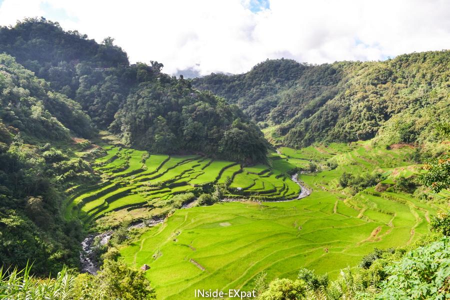 Paysages de rizières aux Philippines