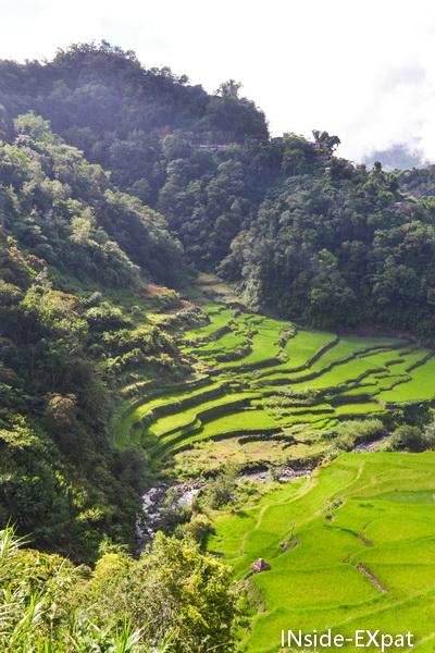 Rizières en terrasse Ifugao