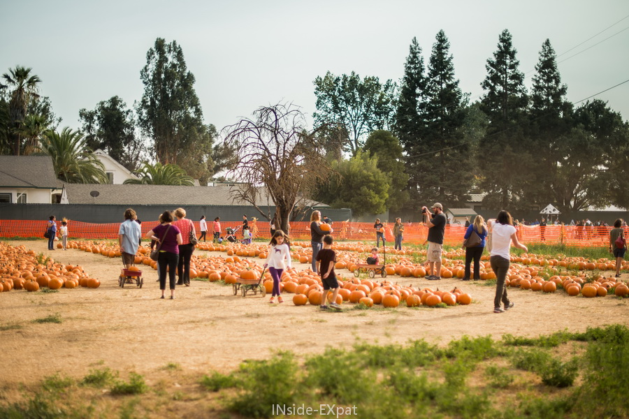 Pumpkin Patch de G&M Farm