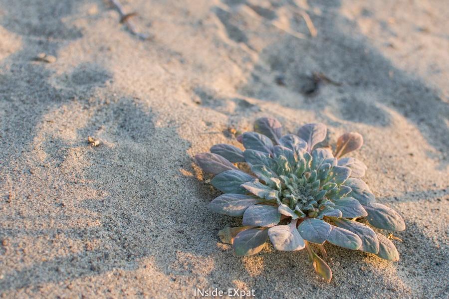 vegetation dans le desert