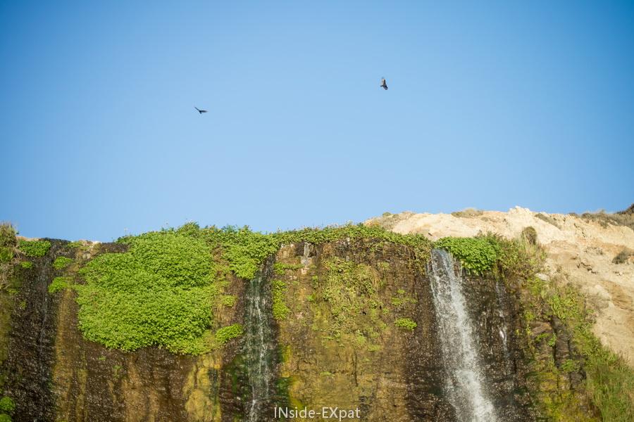 inside-expat-alamere-falls-vegetation-cascade-ocean-pacifique