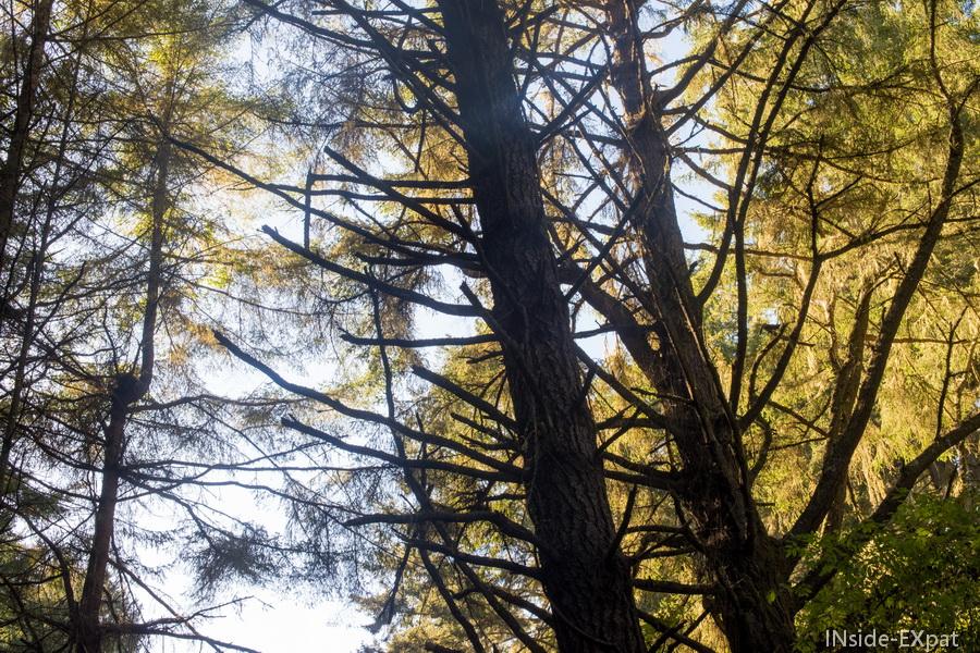 Ciel bleu a travers les arbres