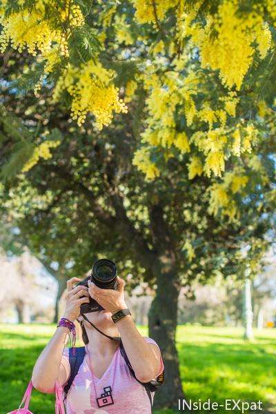 Cécile, paparazzi de mimosa