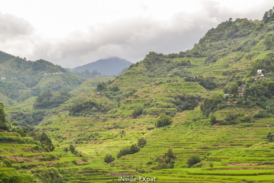Les rizières en terrasse des cordillères des Philippines