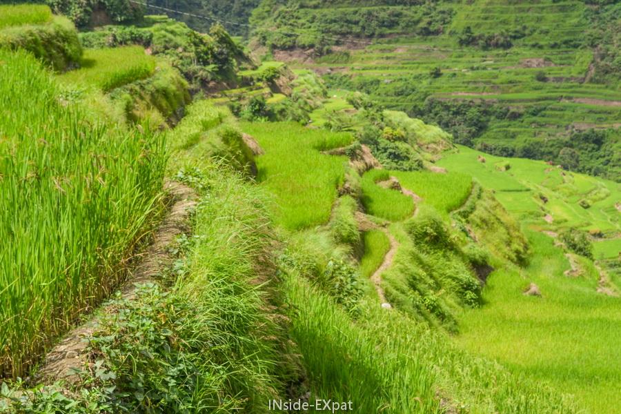 Murs en terre des rizières