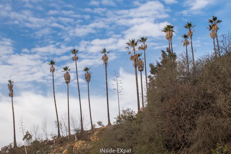 Palmiers sur le sentier