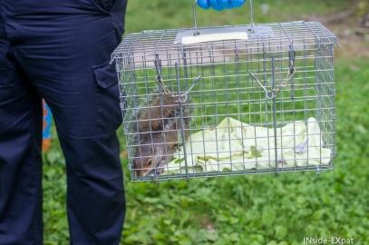 SOS Écureuil blessé