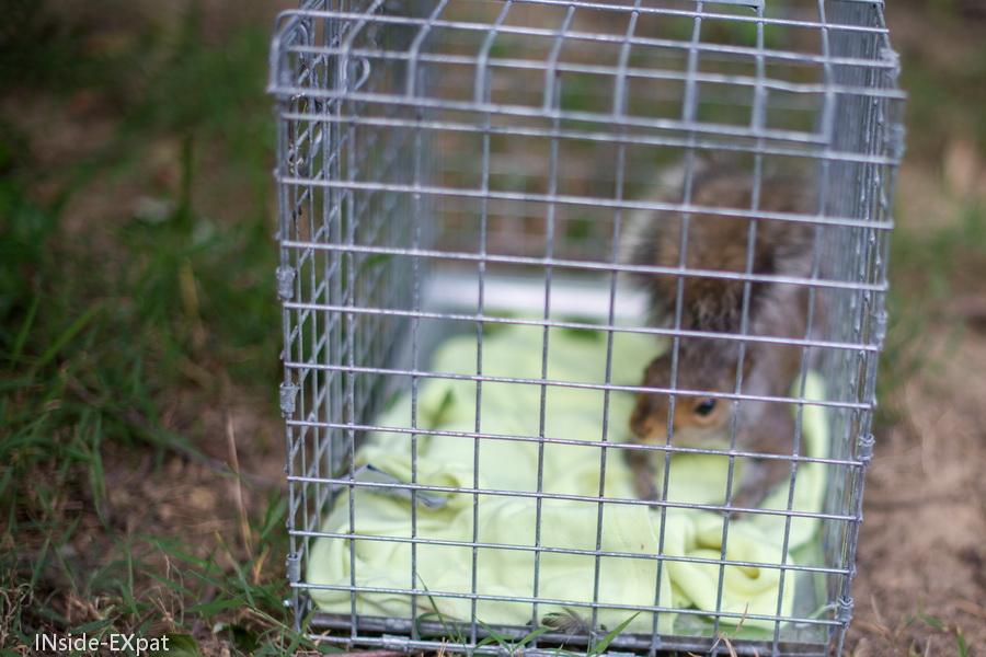ecureuil dans une cage