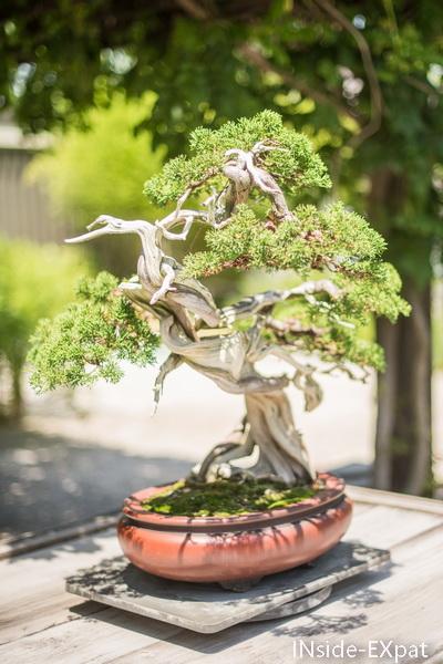 bonsai 3 - us national arboretum