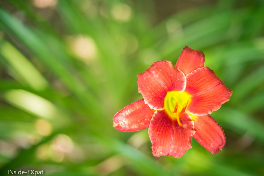 fleur tropicale rouge us national arboretum