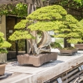 bonsai 2 - us national arboretum