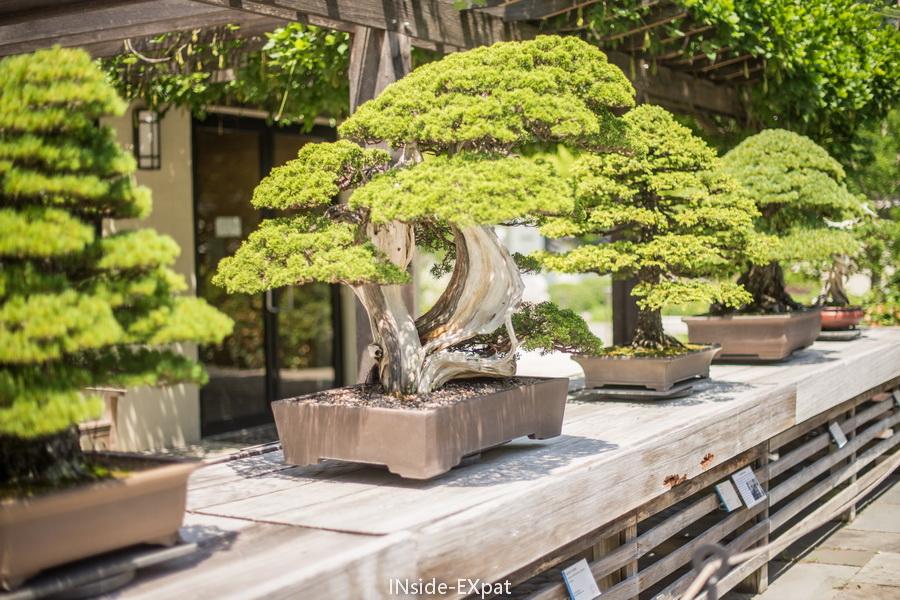 bonsai 2 - us national arboretum