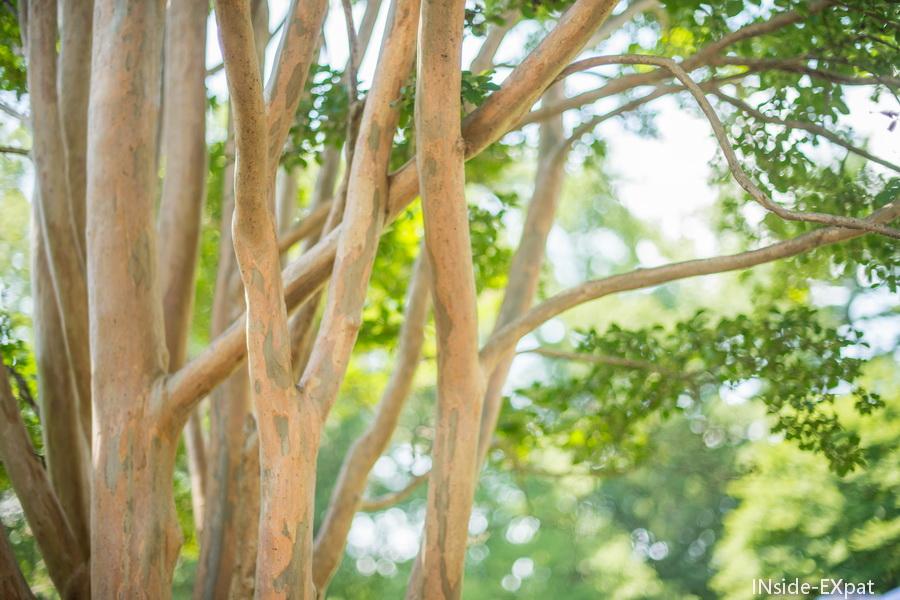 arbres exotiques us national arboretum