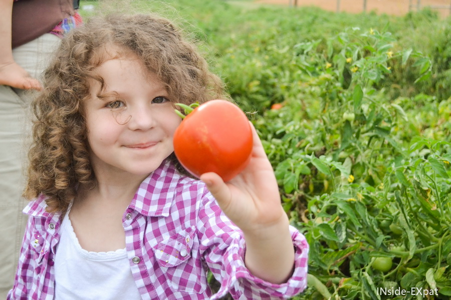 Mimi, cueilleuse de tomates
