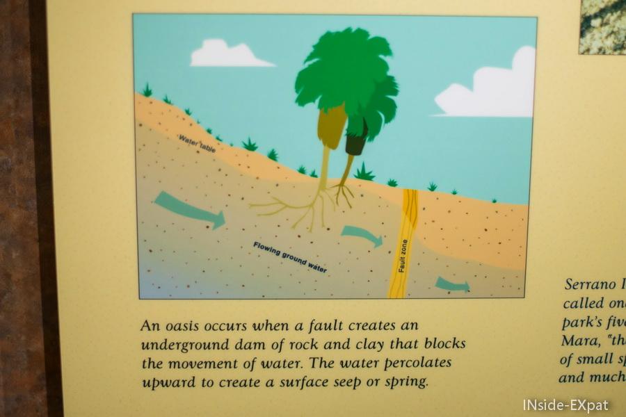 Création d'un oasis