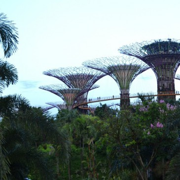 Gardens by the Bay, quand le vert croise le fer