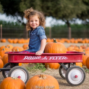 Pumpkins and maze at G&M Farms (Livermore, CA)